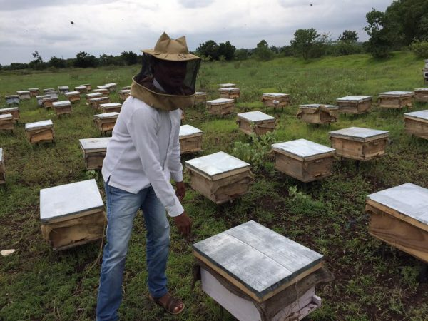Beeboxes in farm